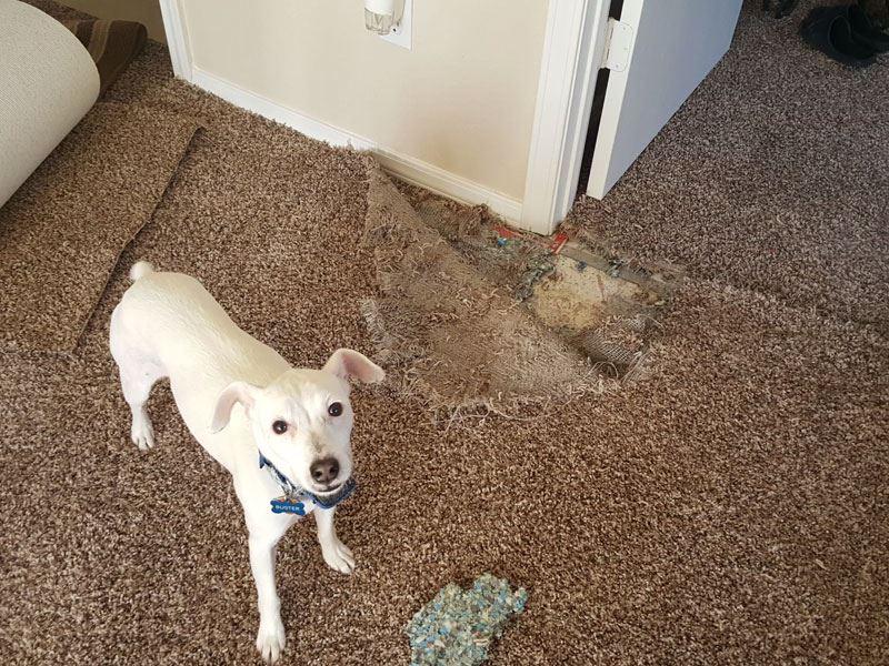 Pet Damage Carpet Repair