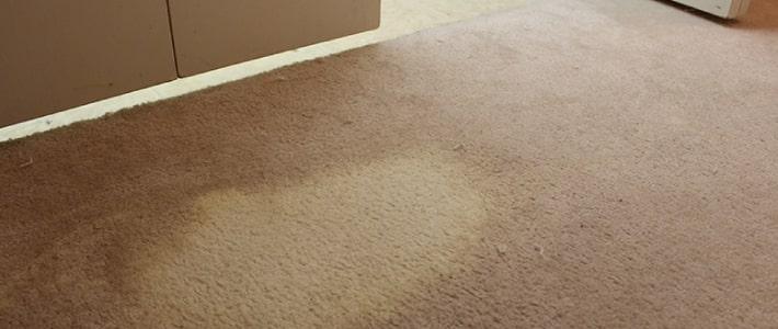 Carpet Dyeing Service