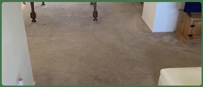 Carpet Sanitization Service In Dandenong