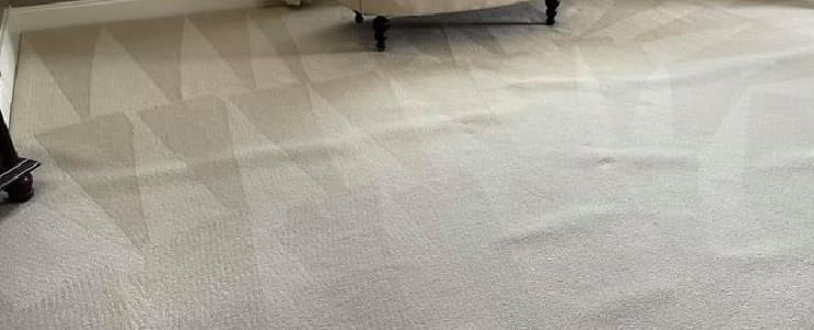 Professional Carpet Cleaning Service (2)