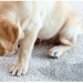 Carpet Cleaning: How to Remove Urine Odour and Stains?