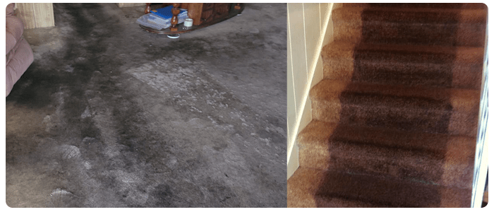 Steam Carpet Cleaning And Dry Carpet Cleaning